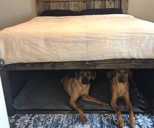 animal, dog, and perrito image