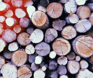 autumn, wood, and autumn vibes image