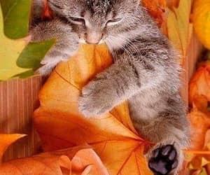 autumn and cat image