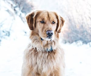dog, animals, and winter image