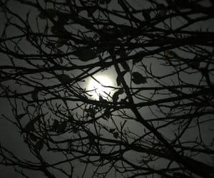 Lyrics, moonlight, and xxx image