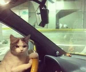 cat and car image