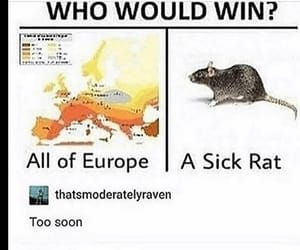 europe, memes, and rats image