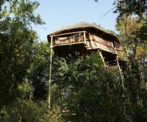 safaris, travel, and treehouse image