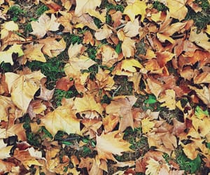 autumn, autumn leaves, and fallen leaves image