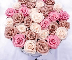 flowers, pink, and roses image