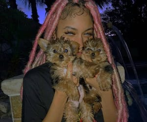 puppy, pink, and ayleks image