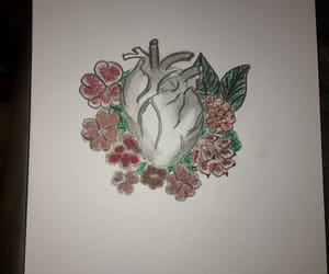 anatomical heart, cardio, and heart image