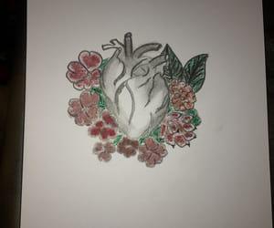 anatomical heart, medicine, and cardio image