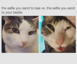 funny, cat, and selfie image