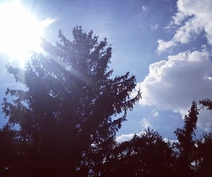 home, nature, and pine trees image