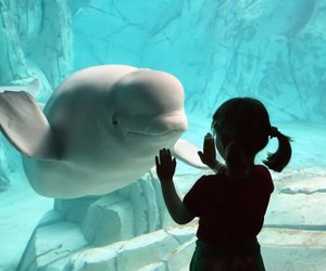 girl, dolphin, and water image