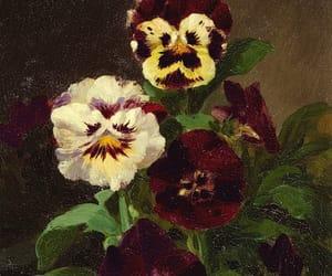 pansies and john williamson image