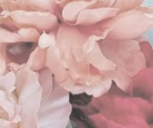 background, beige, and flowers image