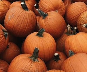 fall, pumpkin, and pumpkins image