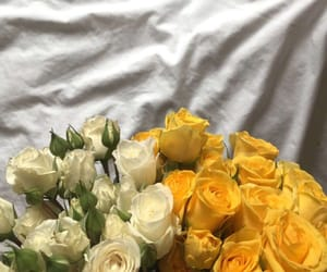 beautiful, flowers, and yellow image