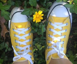converse, flower, and photography image