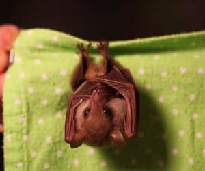 bat and cute animals image