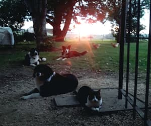 cat, dogs, and place image