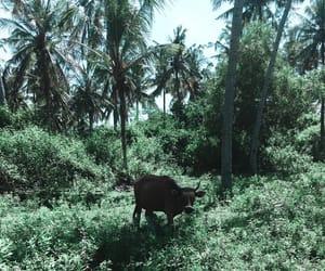 animal, grass, and bali image