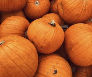 autumn, Halloween, and pumpkins image