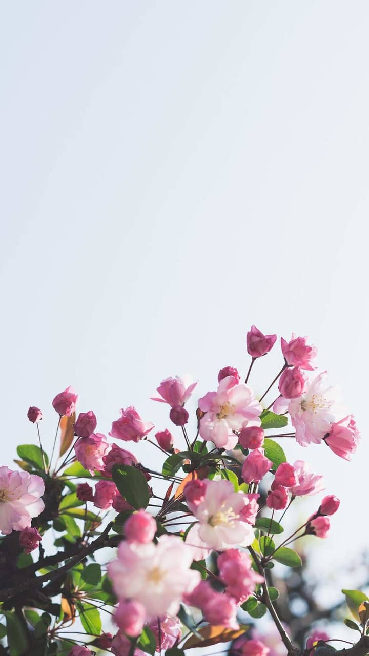 flores, wallpapers, and flowers image