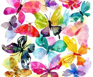 mariposas image