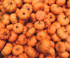 orange, pumpkin, and Halloween image
