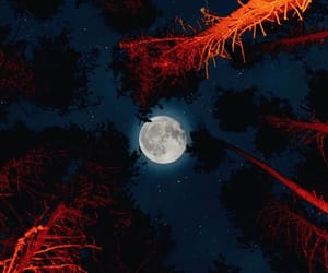 camp, forest, and moon image