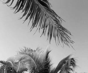 bahamas, black, and palmiers image