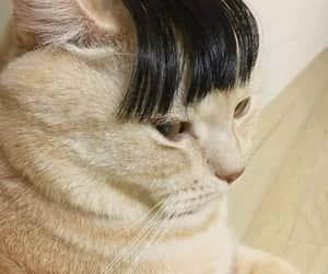 cat and hair image