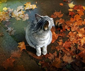 cat, fall, and leaves image