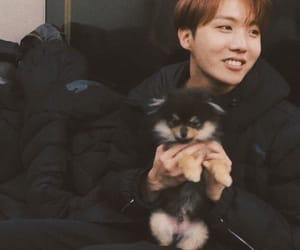 jhope, bts, and hoseok image