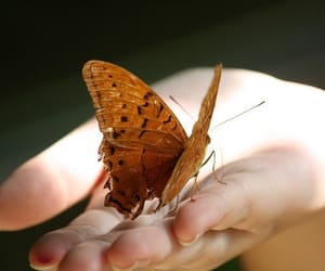 butterfly, hand, and vintage image
