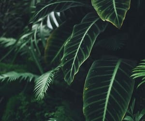 green, nature, and aesthetic image