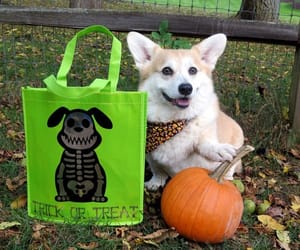 puppy, trick or treat, and Halloween image