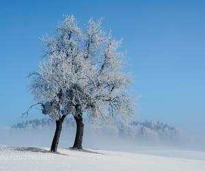 fog, snow, and tree image