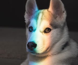 dog, rainbow, and animals image