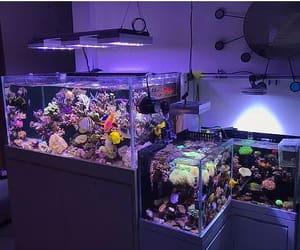 魚缸, 海鮮缸, and 過濾系統 image