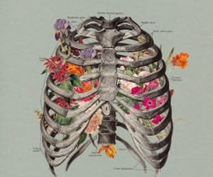 flowers, bones, and art image