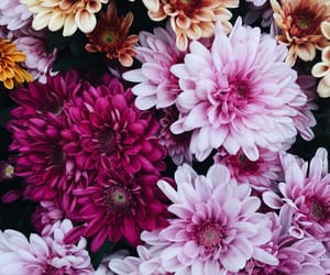 automne, autumn, and flower image
