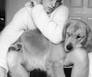 dog, black and white, and dylan sprouse image