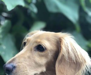 animals, camera, and green image
