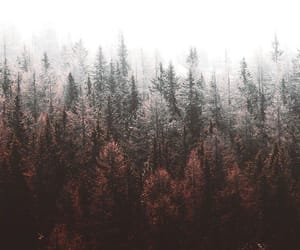 wallpaper and forest image