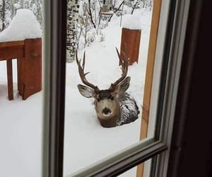 animals, snow, and winter image