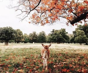animals, autumn, and forest image