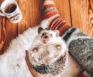 animal, automn, and hot chocolate image