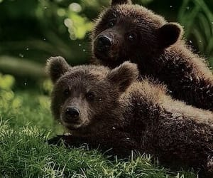 animal, bear, and bear cub image