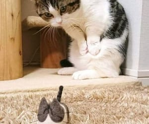 kitty and rodent image