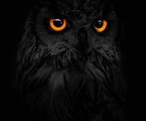 beauty, black, and owl image